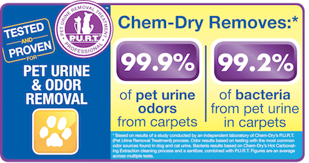 Chem-Dry Carpet Cleaning by Warren removes up to 99.9% of pet odors from carpets